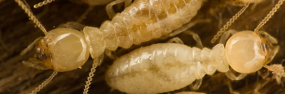 Xpest termites fort worth