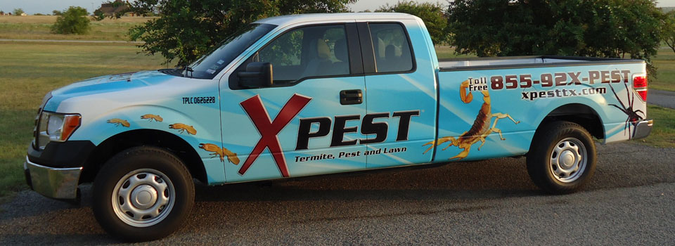 XPest wood destroying report fort worth truck